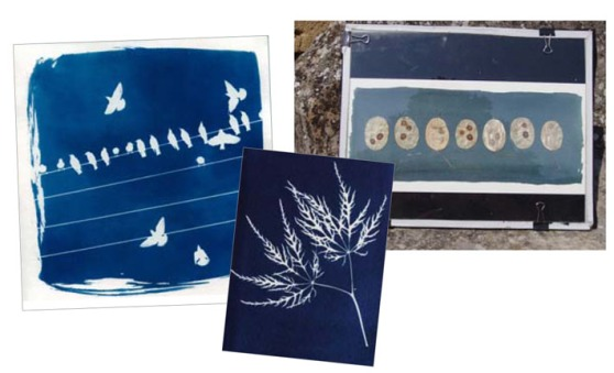 stage_cyanotype_2014.indd